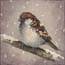 Miniature Painting Sparrow in the snow Atelier for Hope Sparrow paintings