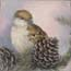 Miniature Painting Sparrow Pinecone Atelier for Hope Sparrow paintings
