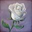 Miniature painting White Rose on purple Atelier for Hope Art