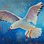 Painting Seagull, Animal paintings Atelier for Hope Doetinchem